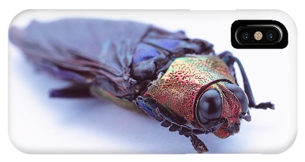 Coleoptera iPhone Case - Beetle by Gustoimages/science Photo Library