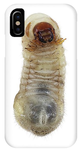 Coleoptera iPhone Case - Beetle Larva by F. Martinez Clavel