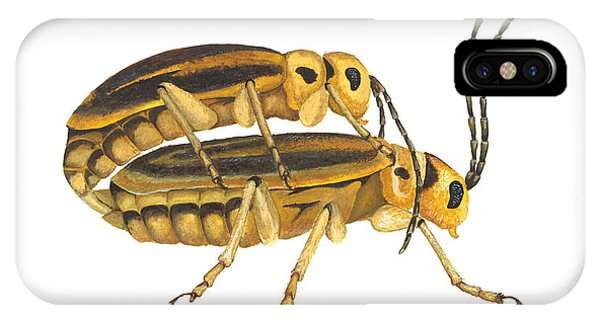 Chrysomelid Beetle Mating Pose IPhone Case