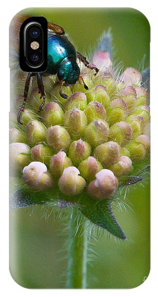 Beetle Sitting On Flower IPhone Case