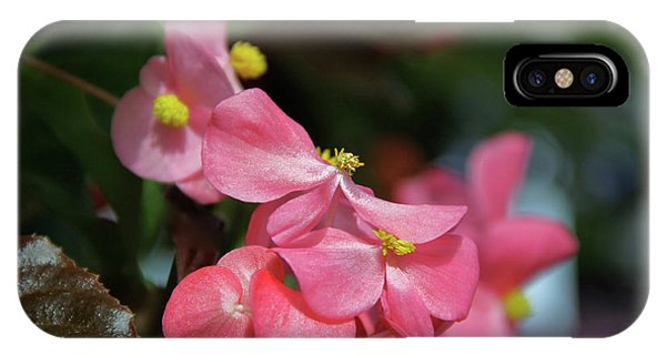 Begonia Beauty IPhone Case