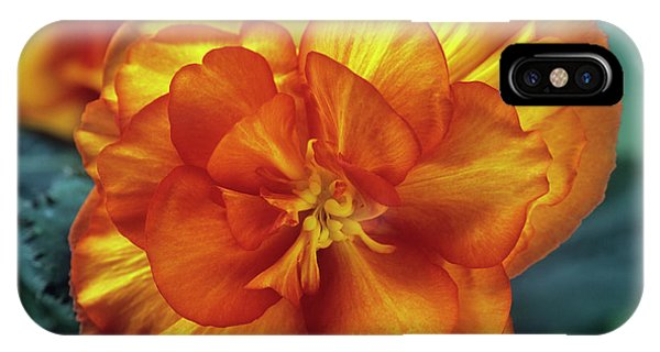 Begonia (begonia Tuberhybrida 'picotee') Phone Case by Ann Pickford/science Photo Library
