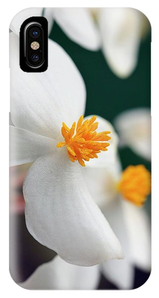 Begonia Minor Phone Case by Geoff Kidd/science Photo Library