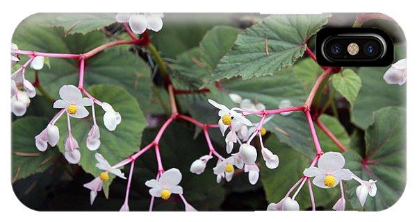Begonia Olsoniae IPhone Case