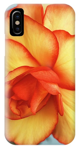 Begonia X Tuberhybrida 'picotee' Phone Case by Ann Pickford/science Photo Library
