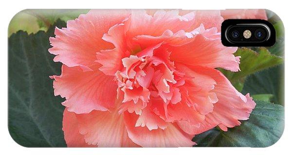 Begonia X Tuberhybrida 'samba' Phone Case by Ann Pickford/science Photo Library