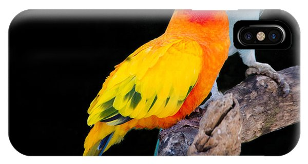 Sun Conure And Ring Neck Parakeet 2 IPhone Case
