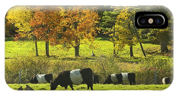 Belted Galloway Cows Grazing On Grass In Rockport Farm Fall Maine Photograph IPhone Case