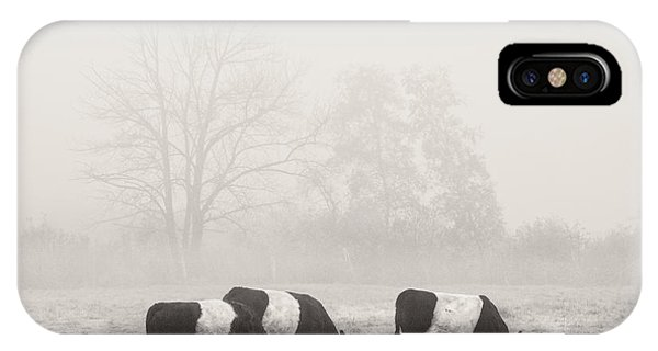 Belted Galloway Cows On Foggy Farm Field In Maine IPhone Case