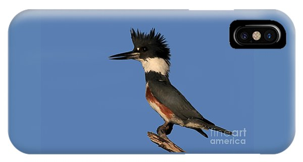 Belted Kingfisher IPhone Case