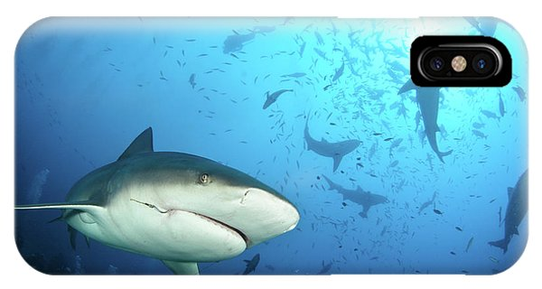 Hammerhead Shark iPhone Case - Beqa Shark Labs by Alexander Safonov