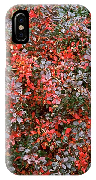 Berberis X Media 'red Jewel' Phone Case by Geoff Kidd/science Photo Library