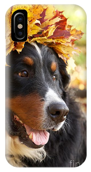 Bernese Mountain Dog iPhone Case - Bernese Mountain Dog In Yellow Leaves by Aleksey Tugolukov