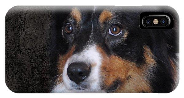 Bernese Mountain Dog iPhone Case - Bernese Mountain Dog by Jai Johnson