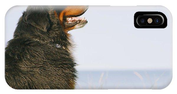 Bernese Mountain Dog iPhone Case - Bernese Mountain Dog Looks Aside by Aleksey Tugolukov