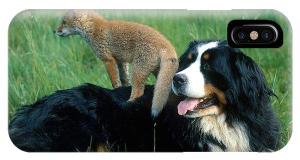 Bernese Mountain Dog iPhone Case - Bernese Mountain Dog With Fox by Hans Reinhard