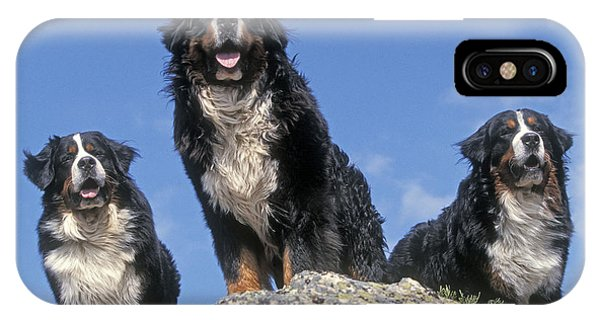 Bernese Mountain Dog iPhone Case - Bernese Mountains Dogs by Jean-Michel Labat