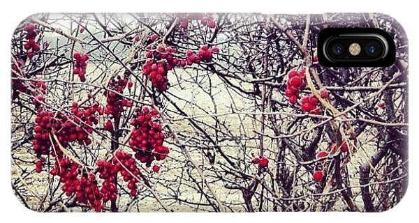 Bright iPhone Case - Berries In The Hedgerow by Nic Squirrell
