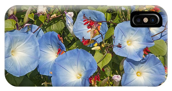 Bhubing Palace Gardens Morning Glory Dthcm0433 IPhone Case