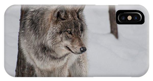 Big Bad Wolf IPhone Case