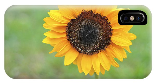 Big Bright Yellow Colorful Sunflower Art Print IPhone Case
