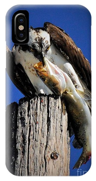 Ospreys iPhone Case - Big Fish by Quinn Sedam