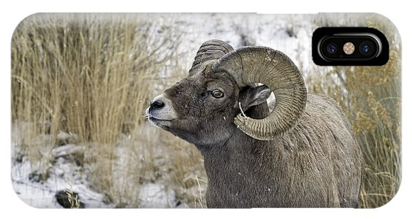 Big Horn Ram Phone Case by Bob Dowling