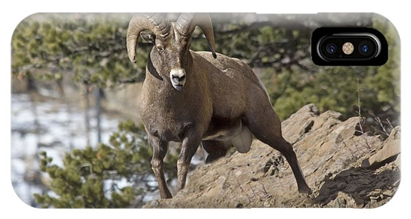Big Horn Ram IPhone Case