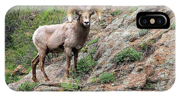 Bighorn Sheep Phone Case by Kathy Eastmond
