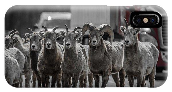 Big Horn Sheep Road Block IPhone Case