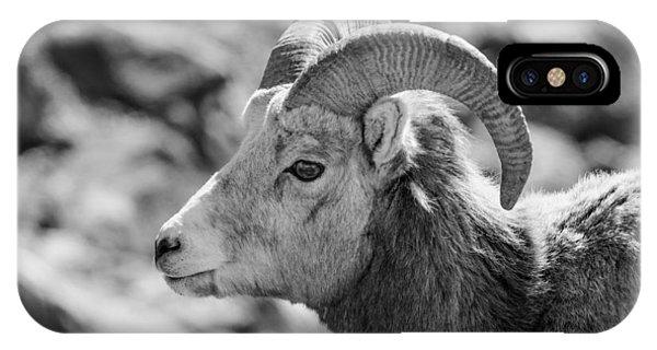 Big Horn Sheep Profile IPhone Case