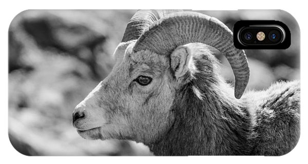 Big Horn Sheep Profile IPhone Case
