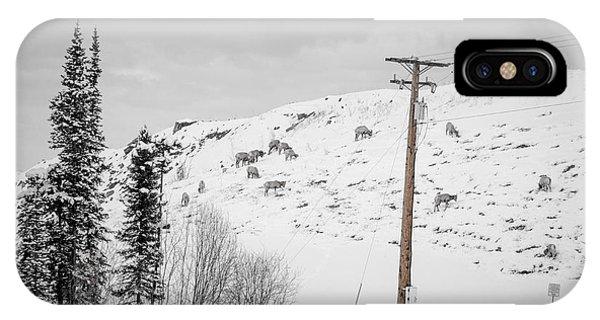 Big Horn Sheep Hinton Hillside IPhone Case