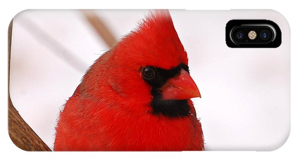 Big Red  Cardinal Bird In Snow IPhone Case