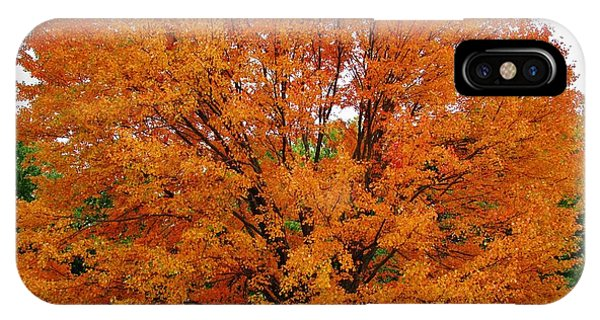 Big Tree In Autumn Phone Case by Thomas  McGuire