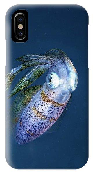 Squid iPhone Case - Bigfin Reef Squid by Ethan Daniels