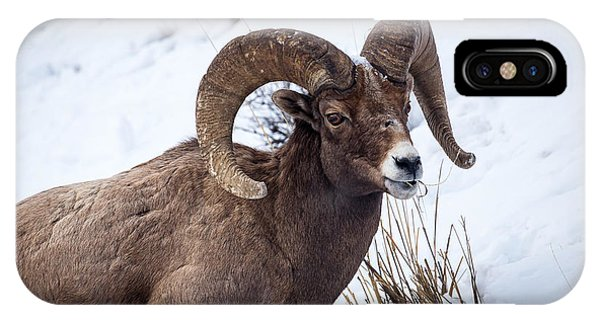 IPhone Case featuring the photograph Bighorn Ram by Michael Chatt