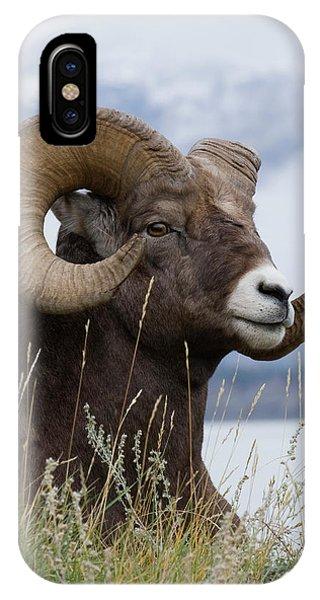 Rocky Mountain Bighorn Sheep iPhone Case - Bighorn Sheep Ram by Ken Archer