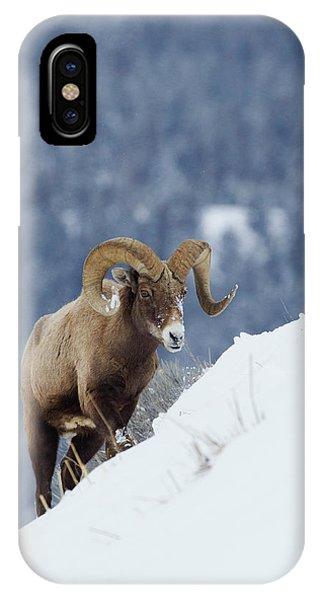 Rocky Mountain Bighorn Sheep iPhone Case - Bighorn Sheep Ram On Winter Range by Ken Archer