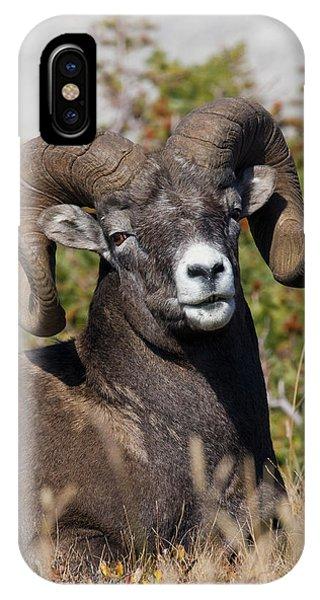 Rocky Mountain Bighorn Sheep iPhone Case - Bighorn Sheep Ram Portrait by Ken Archer