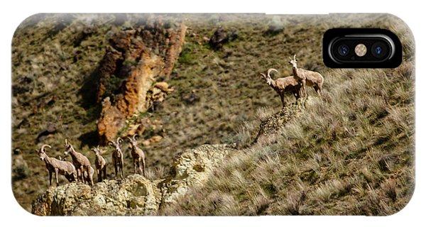 Rocky Mountain Bighorn Sheep iPhone Case - Bighorn Sheep by Robert Bales