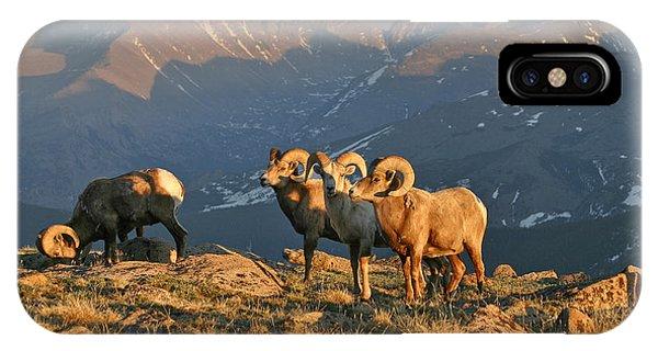 Bighorn Under Longs Peak Phone Case by Robert Yone