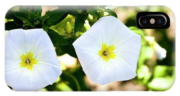 Yellow Trumpet iPhone Case - Bindweed (convolvulus Tricolor) Flowers by Dan Sams/science Photo Library