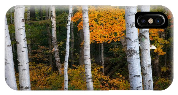 Birch Tree Pan IPhone Case