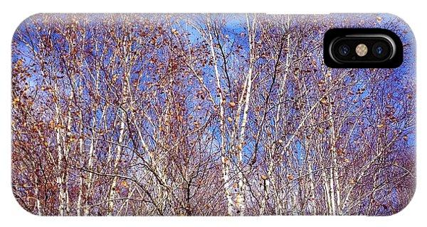 Orange iPhone Case - Birch Trees And Blue Sky In Autumn by Matthias Hauser