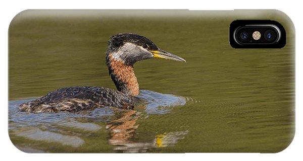 Brian Rock iPhone Case - Bird In Pond by Brian Rock