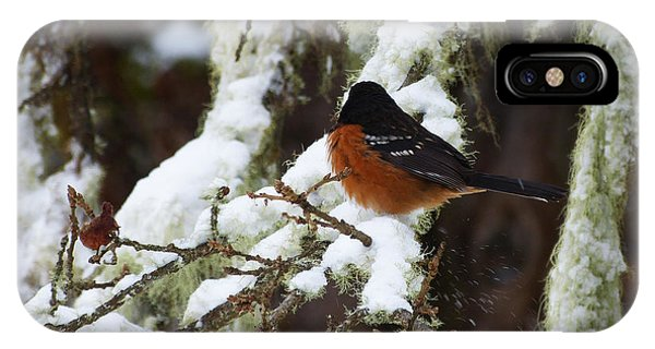 Bird In Snow IPhone Case