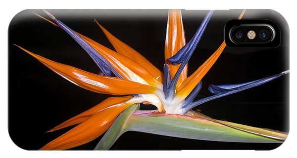 Bird Of Paradise Beauty 4 IPhone Case