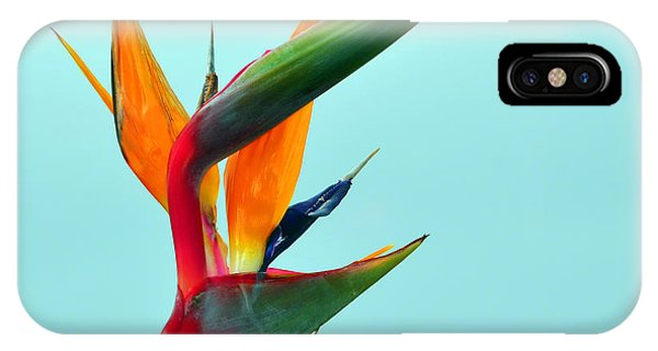 Bird Of Paradise Against Aqua Sky IPhone Case