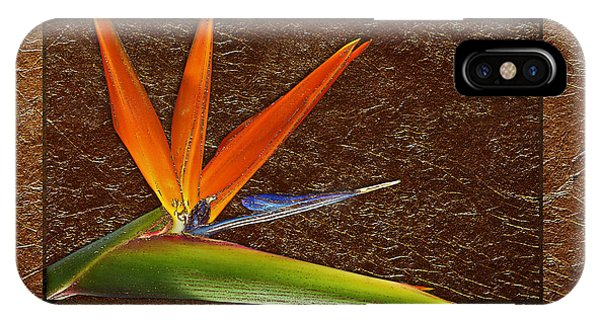 Bird Of Paradise Gold Leaf IPhone Case